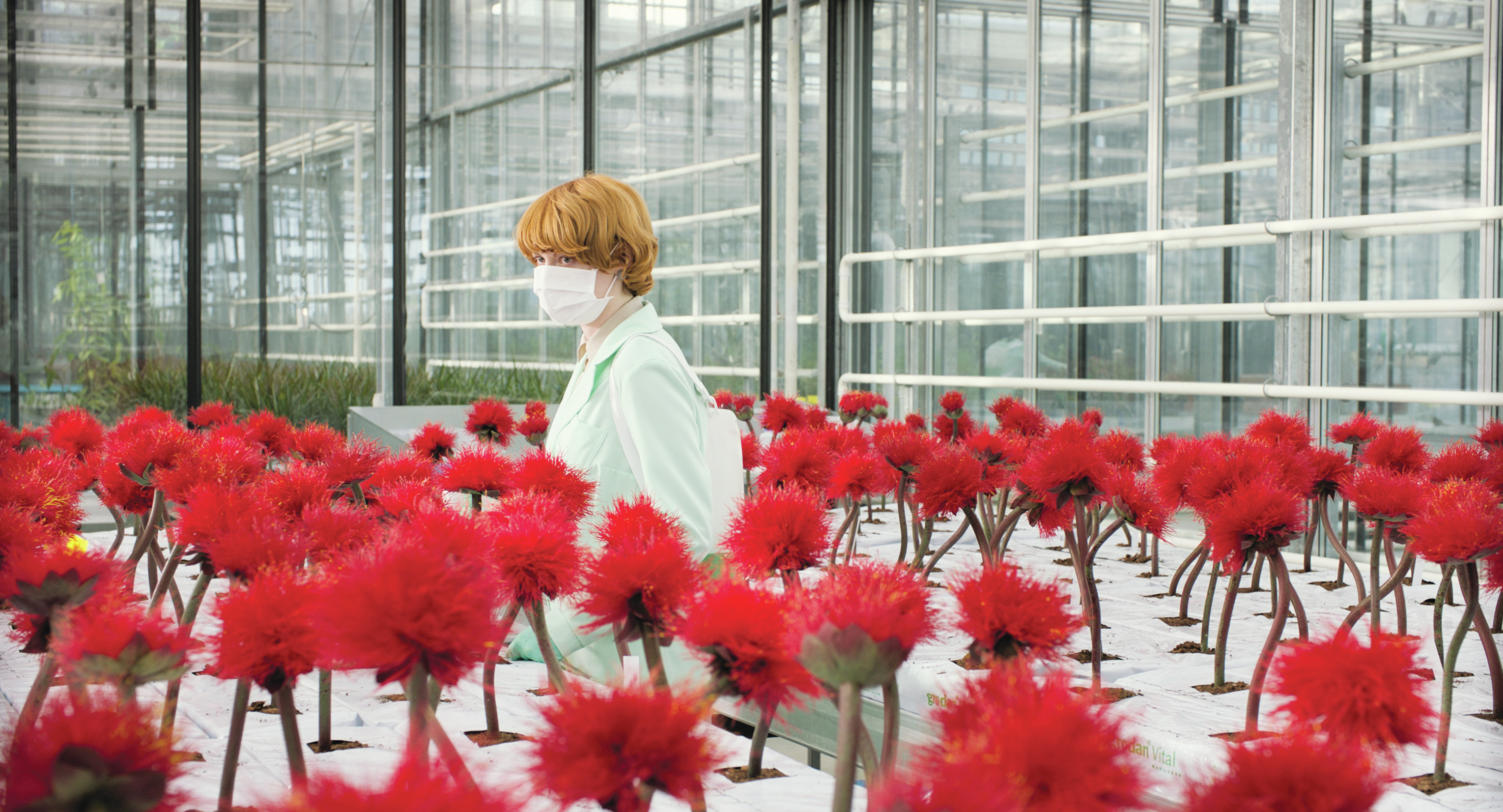 In The Clever 'Little Joe,' Horror Is Horticultural