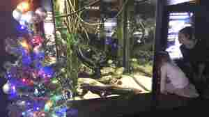 Noeel: Electric Eel Lights Up Christmas Tree In Tennessee