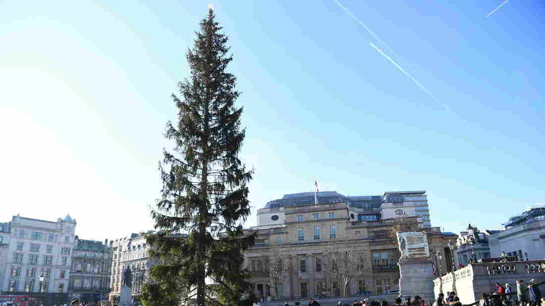 The british are unhappy with the christmas tree from Norway