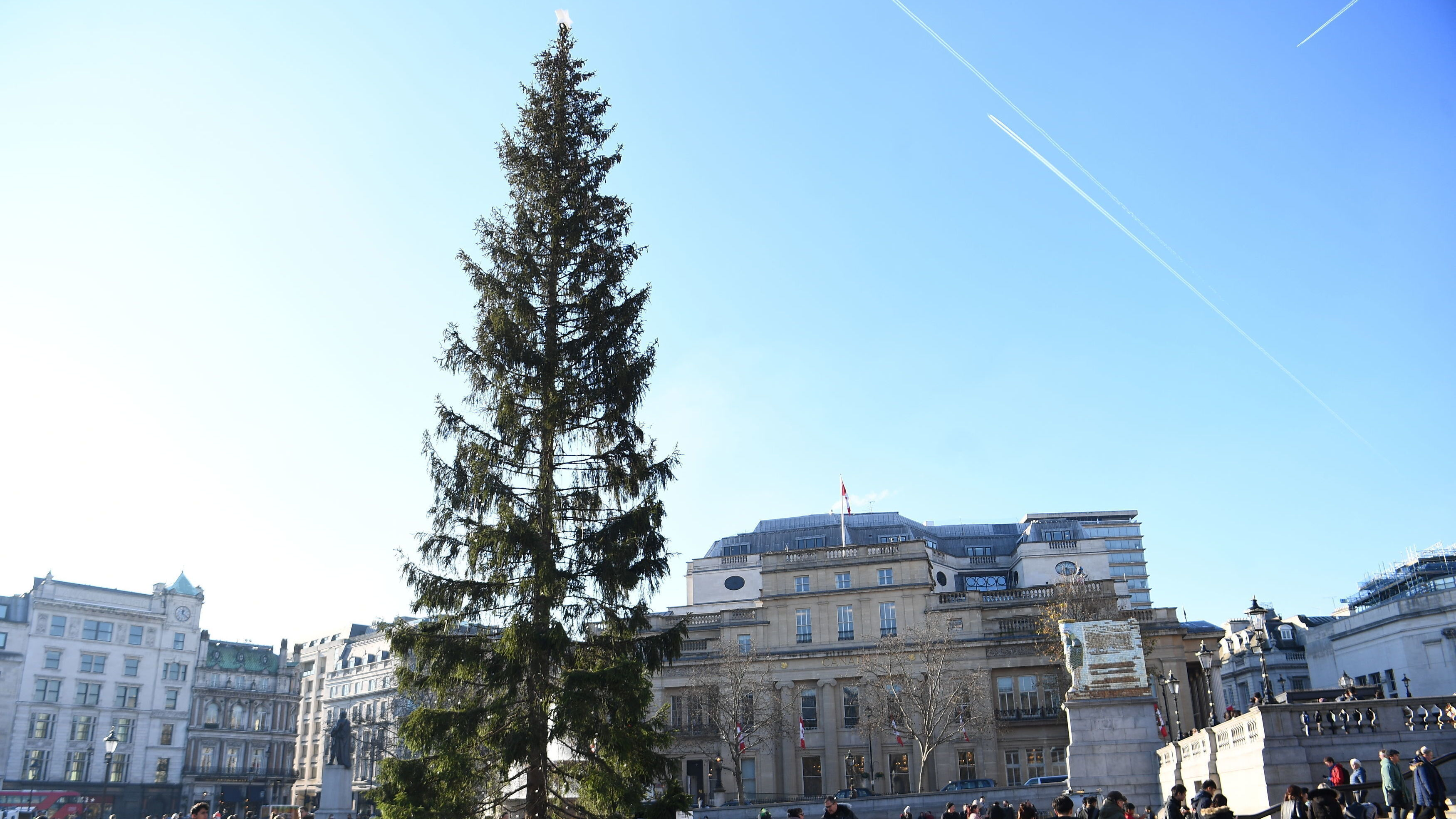 'Britain's Most Famous Christmas Tree' Criticized For Looking Sparse, Droopy And Sad   NPR