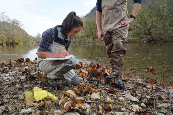 Biologist Rose Agbalog documents the number and types of dead mussel species she found during a brief survey on the Clinch River. On particularly bad days, hundreds of shells line the banks.
