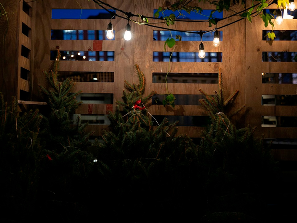 The business of Christmas trees: How millennials might be