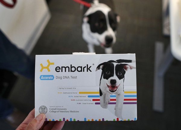 The Embark DNA test is one among a dozen or so tests on the market that promise to tell you your dog's ancestry.