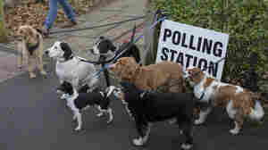 U.K. Holds A Pivotal General Election, And Voters Bring Their Dogs To The Polls