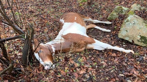 """At least 15 horses were shot and killed in Floyd County, Ky., in what one resident calls """"a very large act of evil."""""""