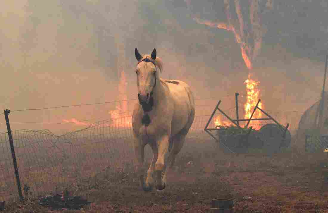 Westlake Legal Group gettyimages-1191120340_custom-74bf6029ab786e7fe941335f0a015891aeeb2658-s1100-c15 In Australia Wildfires, Scenes Of Smoke, Sparks And Chaos