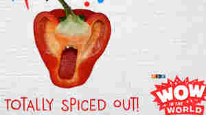 Totally Spiced Out! (encore)