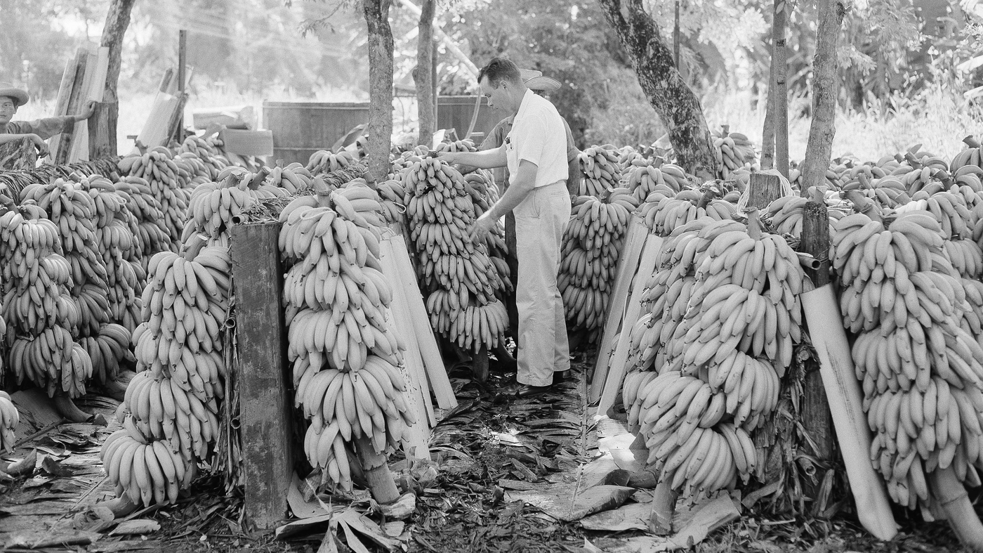 There Will Be Bananas