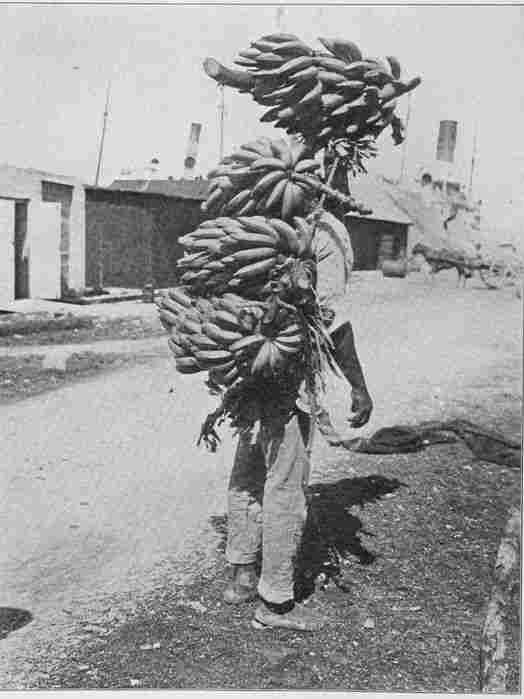A United Fruit worker carrying bananas.
