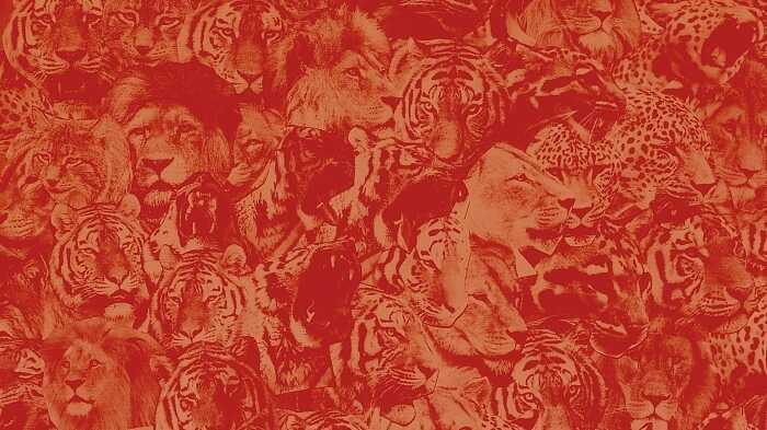 Viking's Choice: Polvo Reissues, Speed Punk, Apocalyptic Rebetika