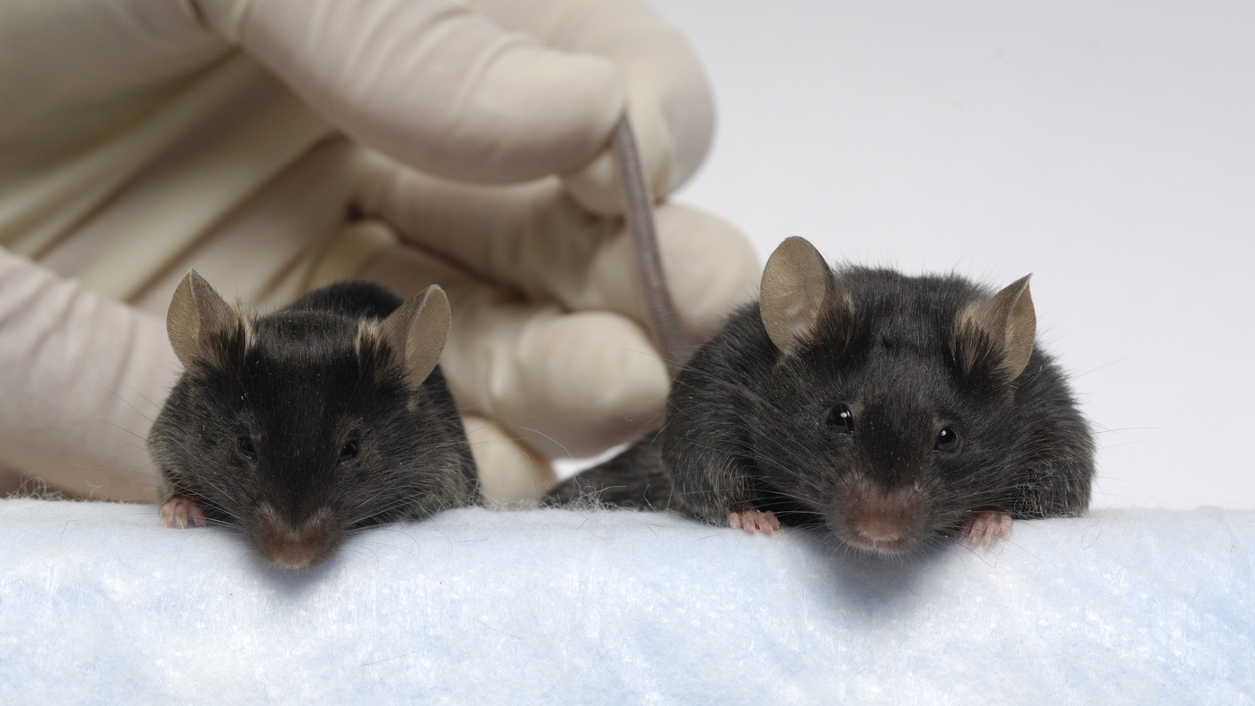 Mighty Mice In Space May Help Disabled People On Earth Shots Health News Npr
