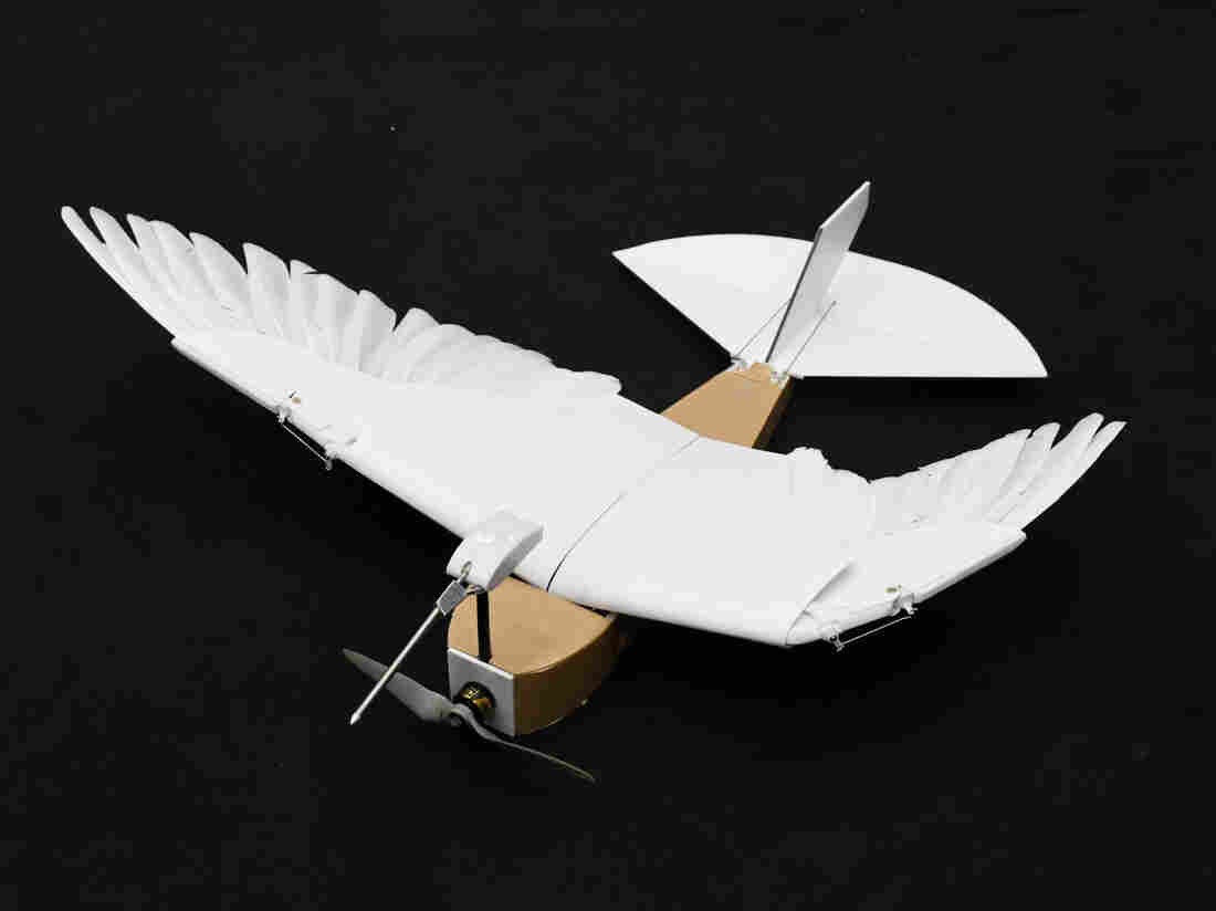 PigeonBot is a robot bird fitted with real feathers