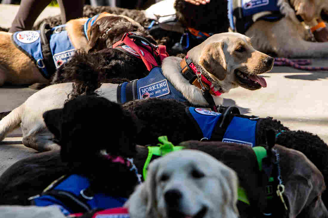 Westlake Legal Group diabetes-alert-dogs-3_custom-5712eaa3c754e1f6a243f43c400a6343f46839fe-s1100-c15 The Hope And Hype Of Diabetic Alert Dogs