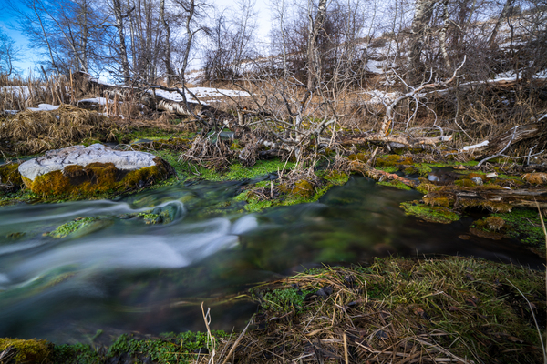 Water emerges from the headwaters of Nevada Spring Creek at around 44 degrees year-round. A mitigation bank provided private money to reconnect it to the Blackfoot River, and restore a prized trout fishing habitat.