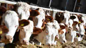 Raw Milk Deal