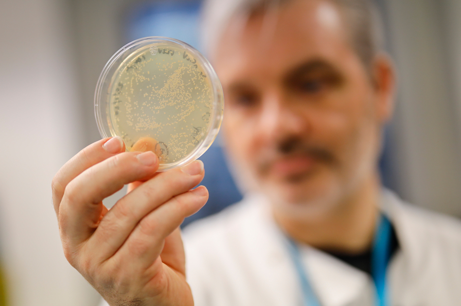 Paul McKay, a molecular immunologist at the Imperial College School of Medicine in London, checks a dish of bacteria containing genetic material from the new coronavirus. He and his team are testing a candidate vaccine. (Tolga Akmen/AFP via Getty Images)