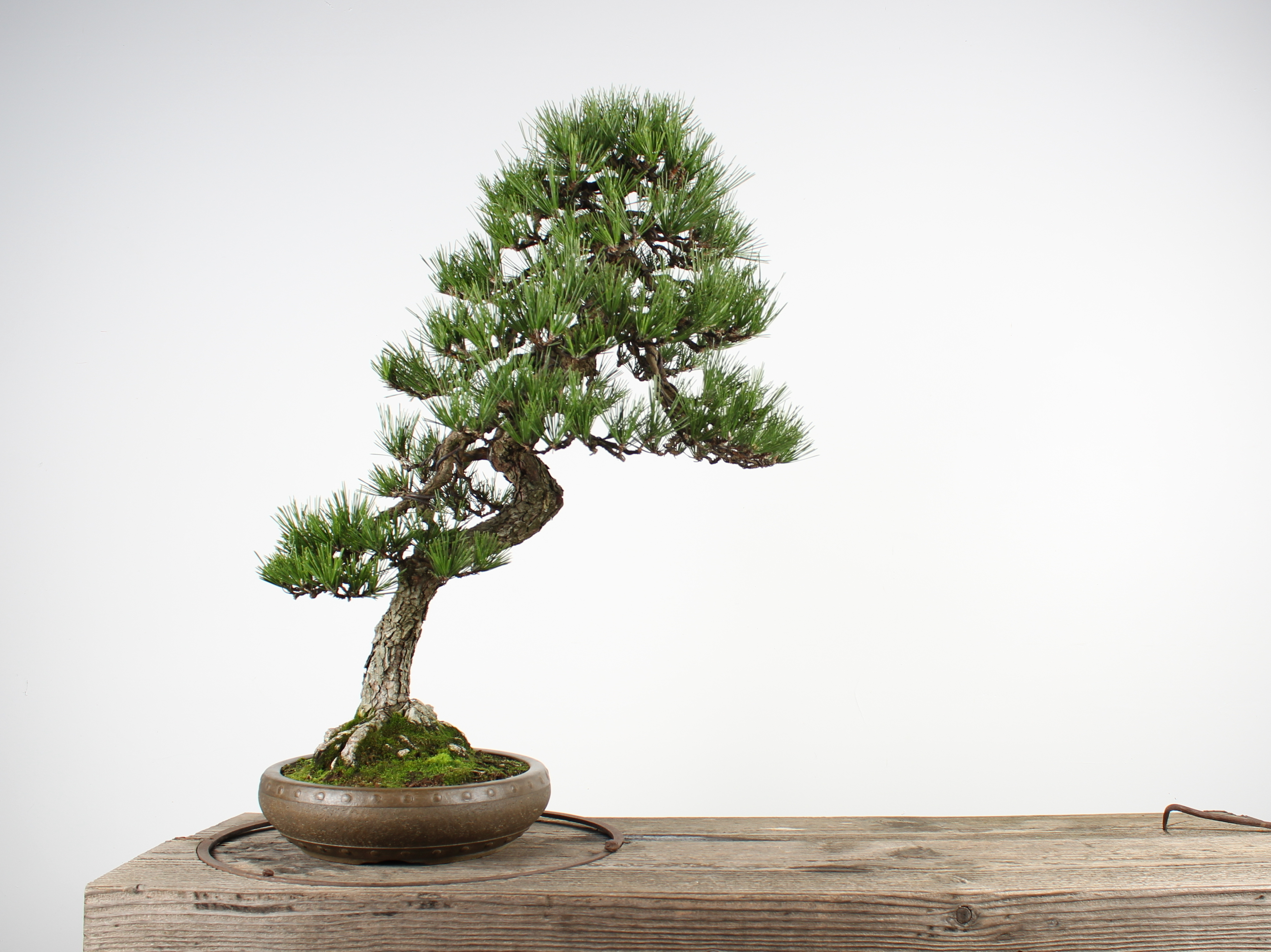 Priceless Bonsai Trees Stolen From Museum In Washington State Npr Houston Public Media