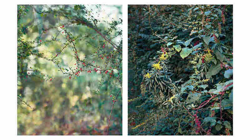 A Photographer's Guide To 'Slow Seeing' The Beauty In Everyday Nature