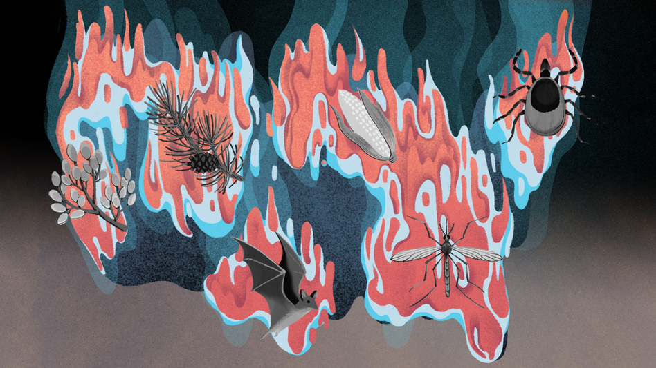 (Illustrations by Cornelia Li for NPR)