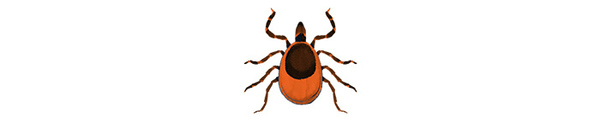 A tick  | Illustration by Cornelia Li for NPR