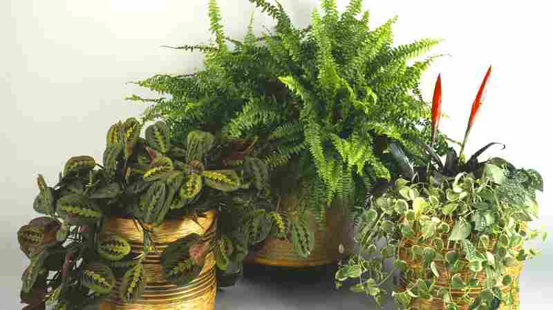 The Lessons To Be Learned From Forcing Plants To Play Music