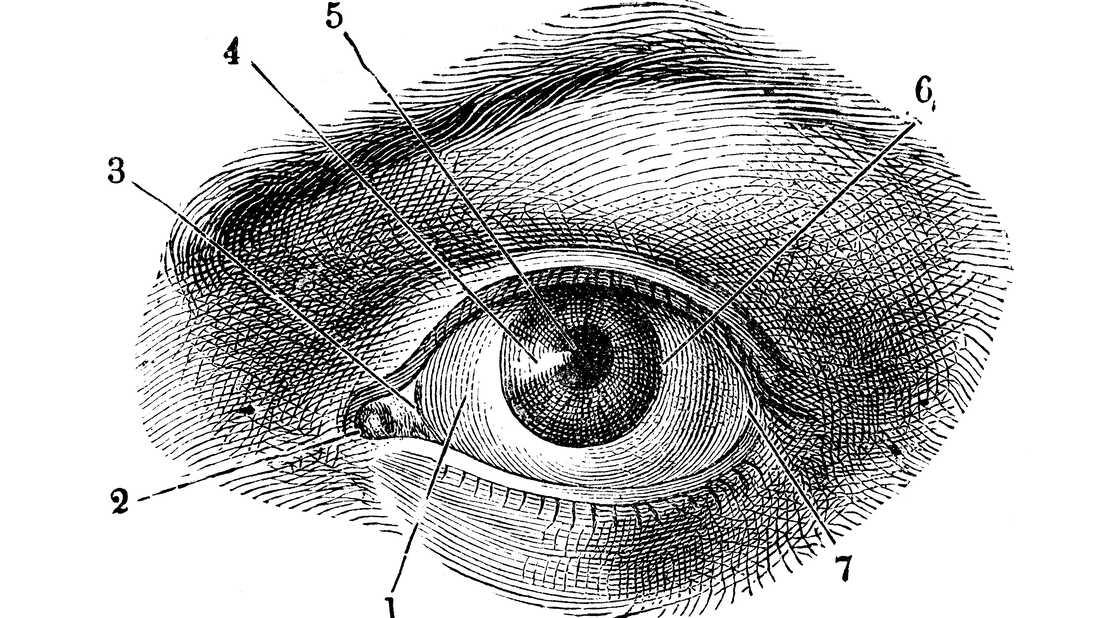 Antique illustration of human body anatomy: Human eye