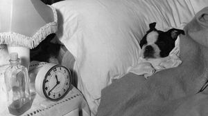 It's Okay To Sleep Late (But Do It For Your Immune System)