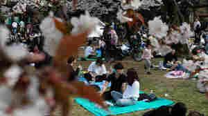 Tokyo Cherry Blossom Festival Draws Crowds Despite Coronavirus Warnings