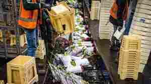 The Netherlands' Huge Flower Sector Wilts As Coronavirus Hurts Business