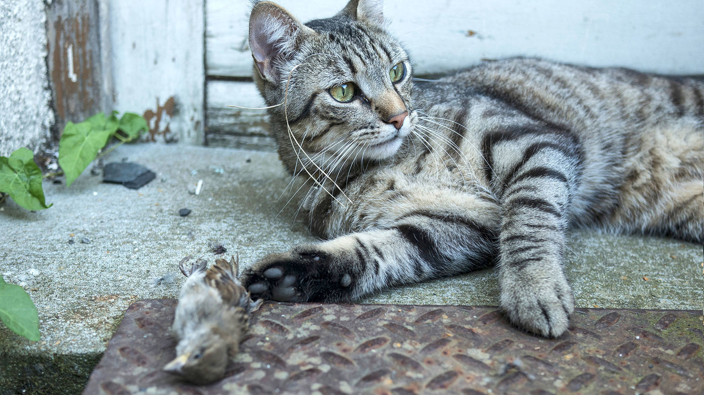 Why House Cats Are God S Perfect Little Killing Machines Npr