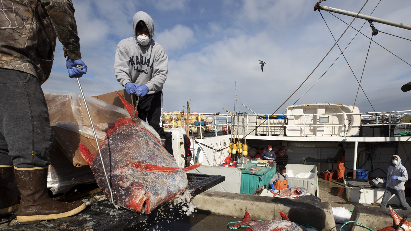 Commercial Fishermen Struggle To Survive In The Face Of Coronavirus