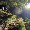 Fires Where They Are 'Not Supposed To Happen' In Australia's Ancient Rainforest
