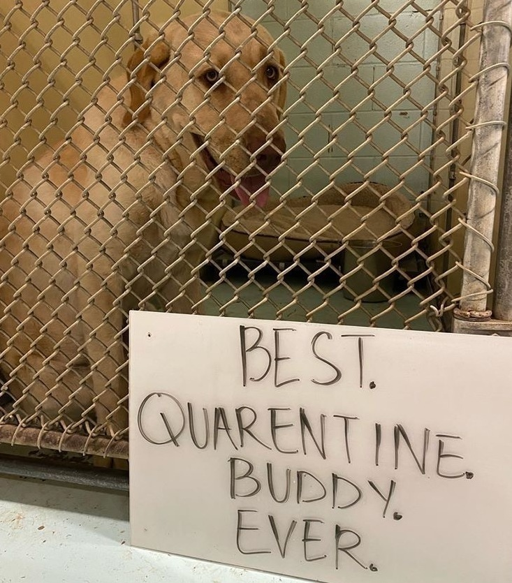 Animal Shelters Urge Humans Confined To Home By Coronavirus Outbreak To Adopt Npr