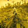 'Illegal To Essential': How The Coronavirus Is Boosting The Legal Cannabis Industry