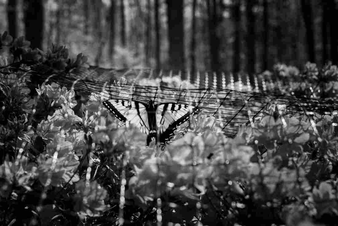 Kasia: As the world slowed down, some days I would take hours just observing animals, all very different from those that I could see in my homeland. One day a butterfly got trapped under a protective net among the azalea flowers. I watched it trying to find its way back to freedom.