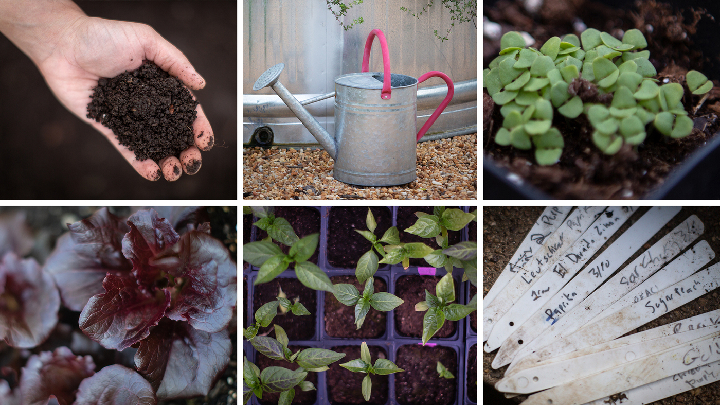 This Is A Good Time To Start A Garden. Here's How