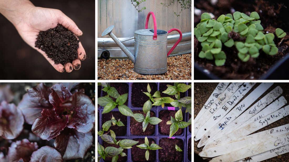 How To Start A Garden The Salt Life, Tips For Starting A Garden
