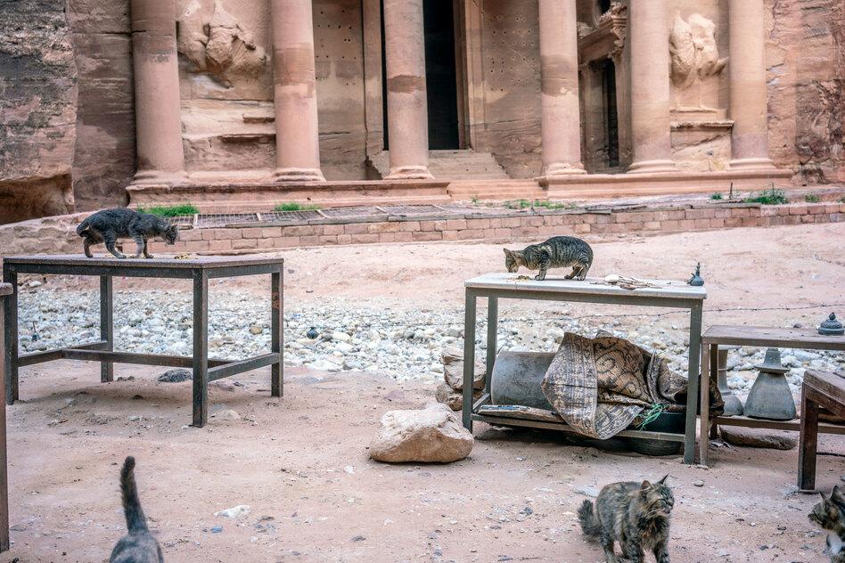 Cats overtake an empty tourist shop in Jordan's ancient city of Petra. (Moises Saman for NPR)