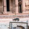 Animals Roam Free In Petra Heritage Site Under Jordan's COVID-19 Lockdown