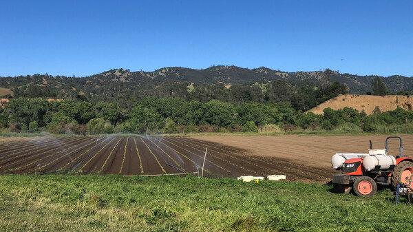 Full Belly Farm, a 450-acre, organic farm, in California
