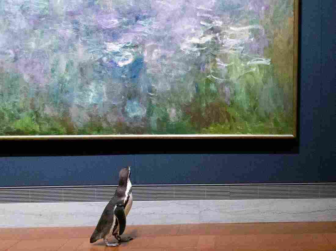 Penguins waddle around art museum during zoo field trip