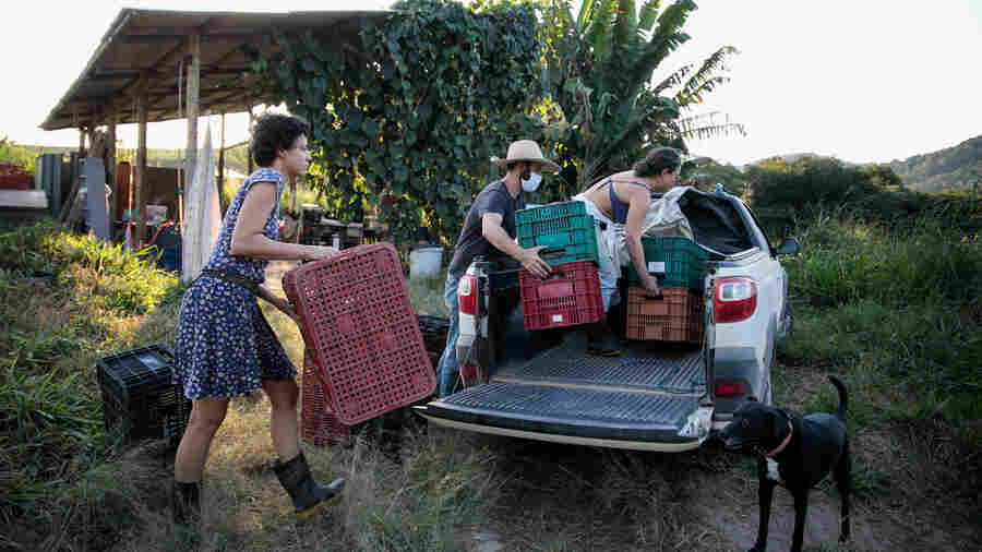 PHOTOS: Brazilian Farmers Hatch A Plan To Send Healthy Food To The Favelas