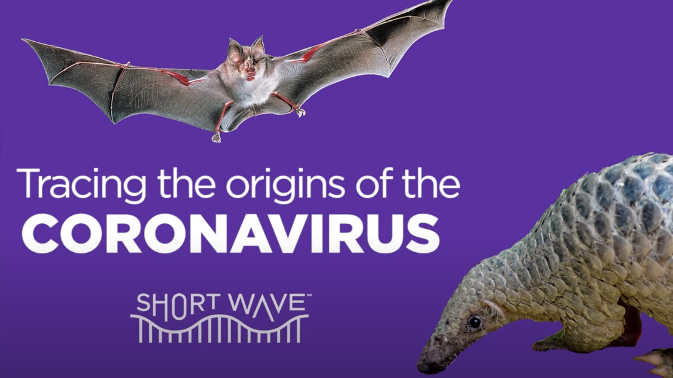 VIDEO: Virus Hunters Seek To Solve The Mystery Of Coronavirus Origins