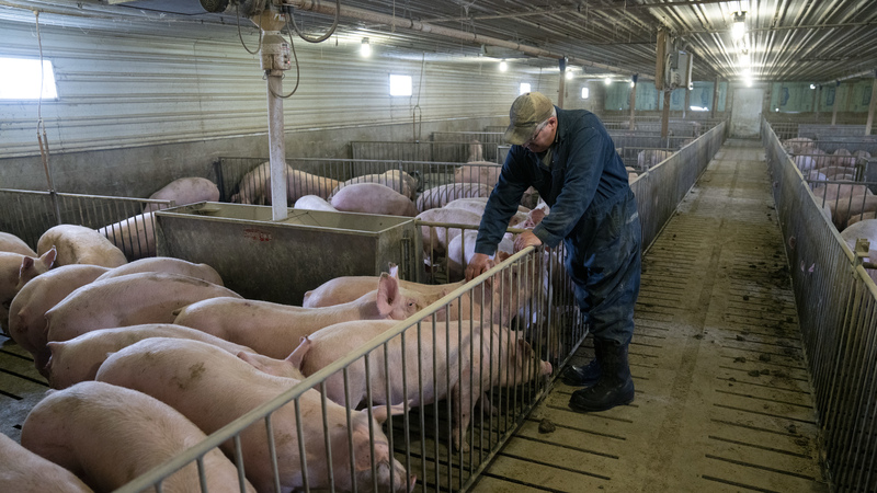 The Beige Book And The Pig Farmer