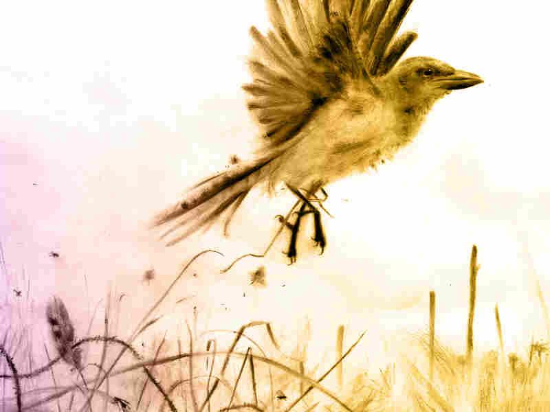 Image of a bird