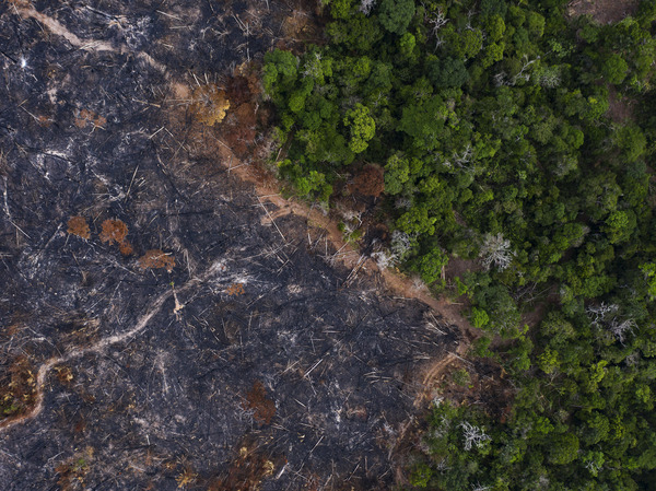 A burned area of the Amazon rainforest in Para state, Brazil, in 2019. A growing body of evidence shows that forest loss and fragmentation can increase the risk of animal-borne infectious disease like coronaviruses.