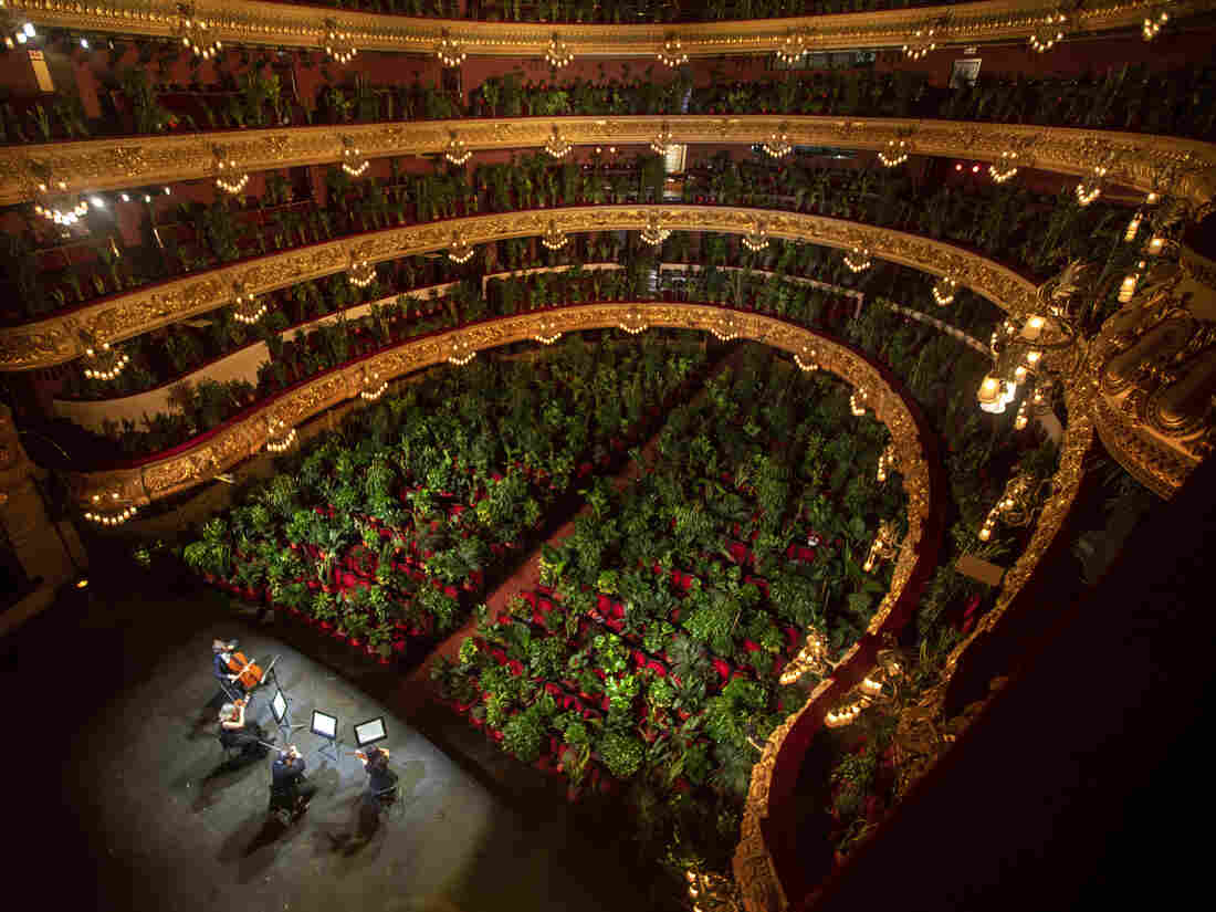 Plants fill seats for Barcelona opera concert