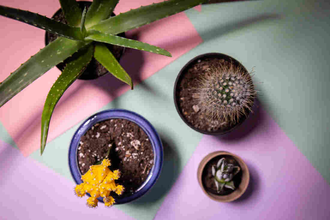 How to take care of house plants, from NPR's Life Kit.