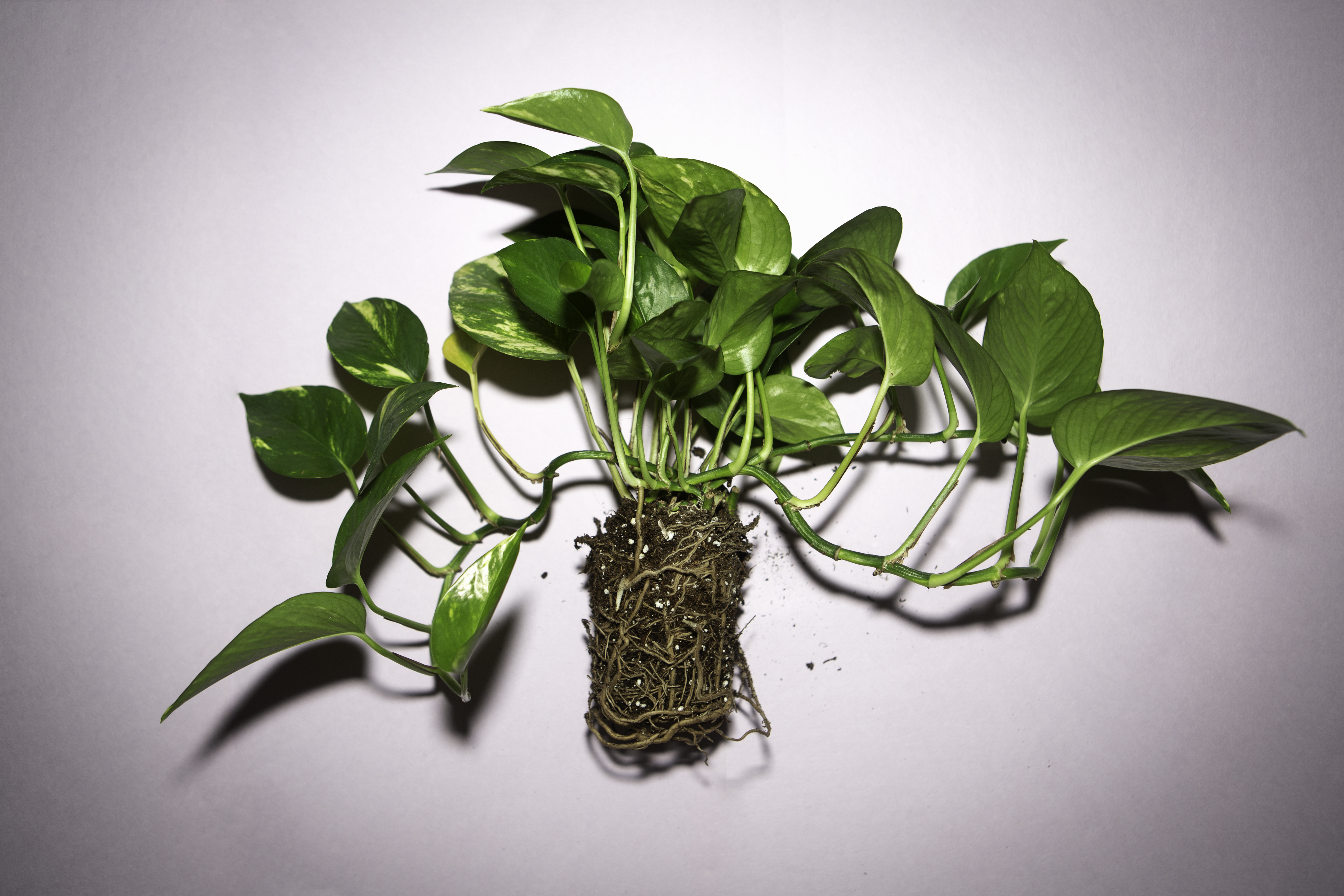 6 Tips For How To Care For Your Houseplants Life Kit Npr