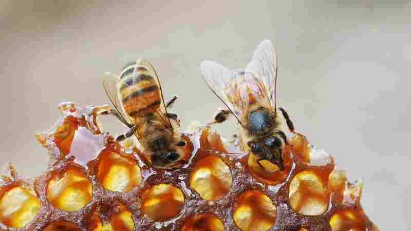 Honeybees Need Your Help